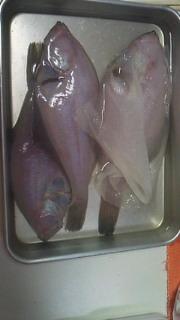 魚の行方(カレイ)