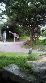 天王寺動物園なう